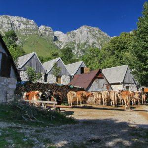 posočje mlekarna planika planine